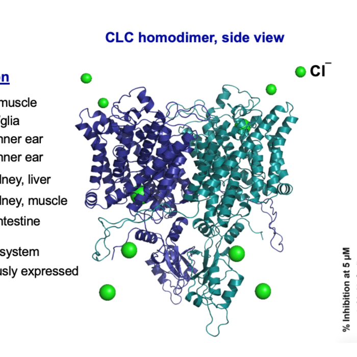 Chloride channels and CLC-Ka inhibitor development
